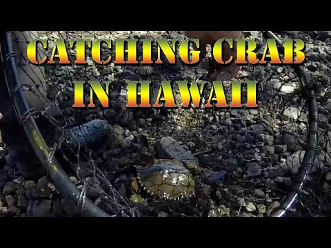 Samoan Crabing ( Mud Crabs ), Hawaii Fishing, And Papio Whipping, With Danny D - B.O.D.S. Episode 14