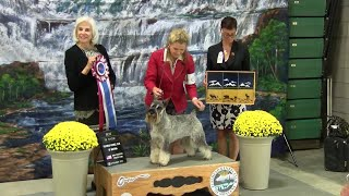 Electric City Kennel Club Dog Show