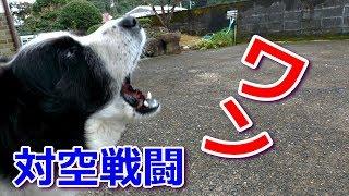 我が家の癒し系愛犬ハリーくんは機嫌が悪いと家の前の電柱にトンビやカ...