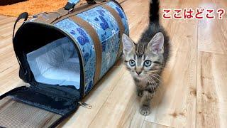生後3ヶ月の子猫が初めて家に来た時の反応がこちらですw