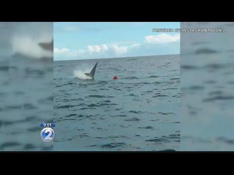 Diver recalls close call with Kauai shark
