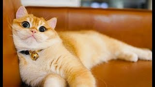 Best Cats, Kittens Videos - Cute and Funny Videos Compilation of Playing, Meowing Cats #94