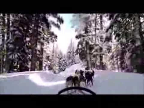 Dogsledding Adventure in Bend OR