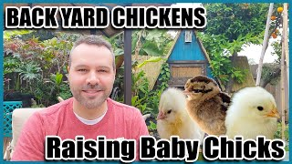 Backyard Chickens 101 - Raising Chickens From Chicks and Chicken Breeds