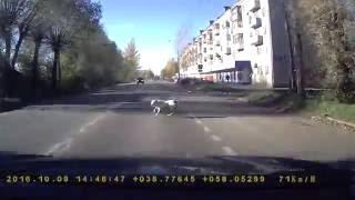 Собака бежала через дорогу