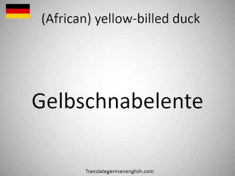 How to say (African) yellow-billed duck in German?