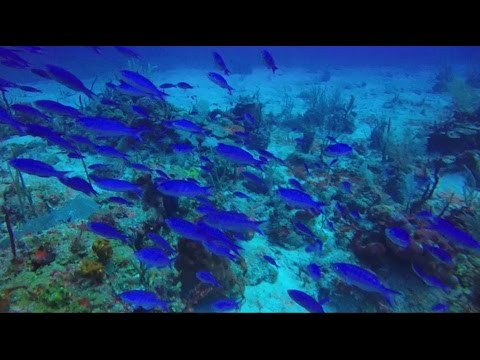 Fish Of The Caribbean HD
