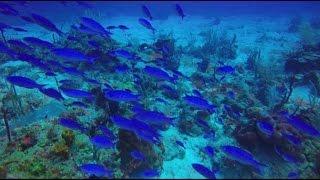 Fish of the Caribbean HD