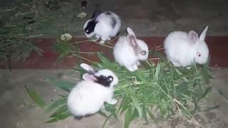 Most funniest babies Rabit ll funny bunny rabbit videos..