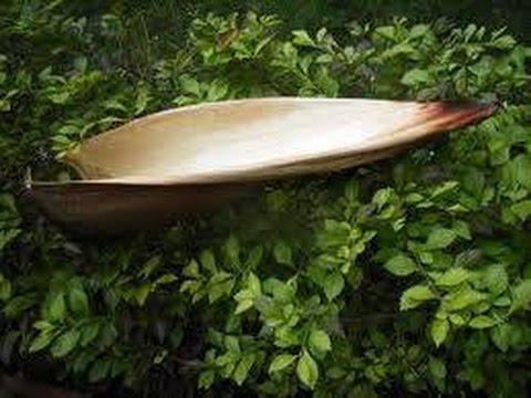 Người Phu Kéo Mo Cau - Thái Châu - Phi Nhung