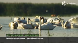 Астраханский заповедник | Природа | Телеканал «Страна»