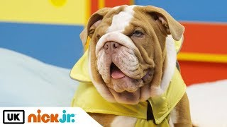 Paw Patrol Christmas Special - Featuring Real Puppies! | Nick Jr. UK