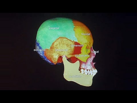 How to Get A Head in Life: The Development of the Craniofacial Complex