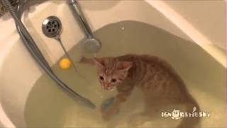 「いい湯だニャ〜」お風呂大好きニャンコ