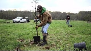 Plan Before You Plant Trees For Wildlife