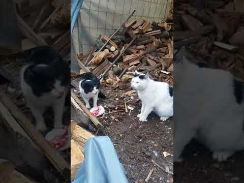 Cat fights