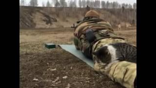 Храброго украинского кота не смутила стрельба из автомата