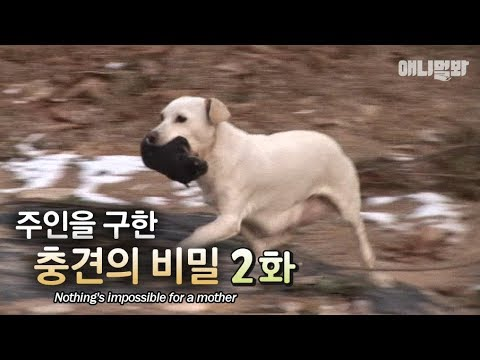"""""""Nothing is impossible for a mother"""" The secret behind the dog that saved the owner EP2"""