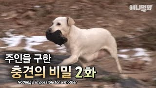 nothing-is-impossible-for-a-mother-the-secret-behind-the-dog-that-saved-the-owner-ep2