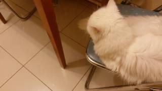 Кот желает Спокойной ночи