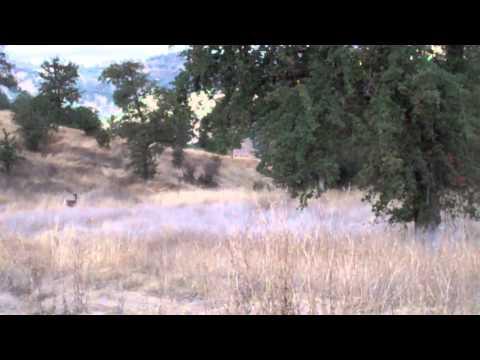 Deer At Cache Creek #2