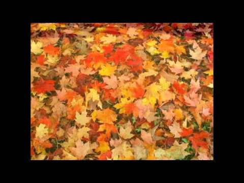How To Clean Up the Leaves In Your Yard | Alpine Landscaping