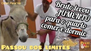 a pessoa mais ignorante e bruta do brasil 12