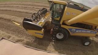 VLOG #35 Żniwa || Rekordowy plon pszenicy ! || C360 3P vs 8t Autosan D47 i D55