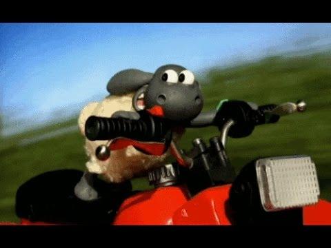 Shaun the sheep :  the big chase