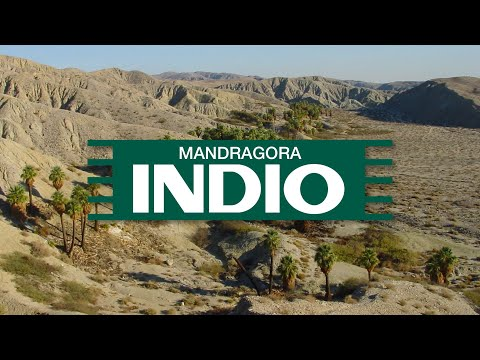 Mandragora - Indio (Original Mix)
