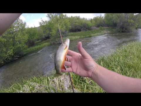 Fly Fishing Idaho: Birch Creek