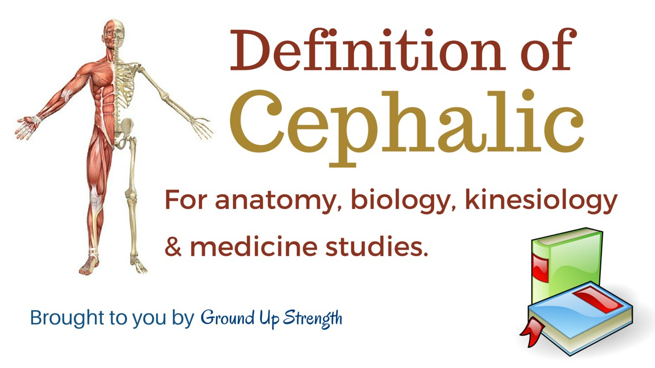 Cephalic Definition (Anatomy, Biology, Kinesiology, Medicine) - YouTube