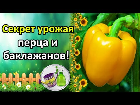 Настурция – полезные свойства, выращивание настурции