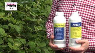 Produkty wpływające na poprawę zawiązania i jakość malin