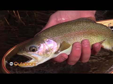 Fly Fishing the Colorado River with Lees Ferry Anglers