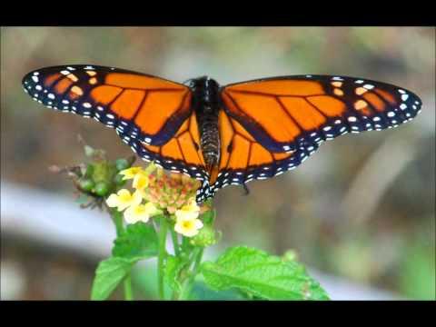 Butterflies & Moths of Costa Rica