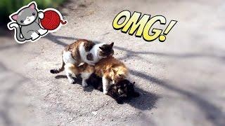 Кошачий секс втроем