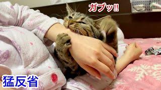 飼い主を噛んでしまい激しく怒られ本気で落ち込んでしまった子猫w
