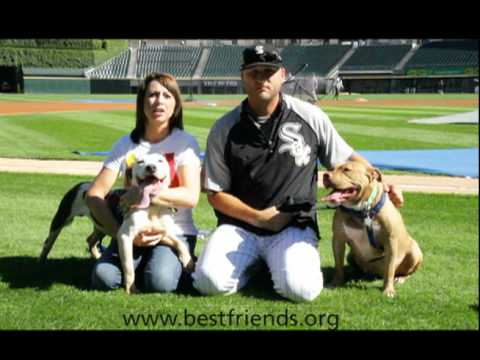 Chicago Court Case Dogs Supported by Jamie and Mark Buehrle