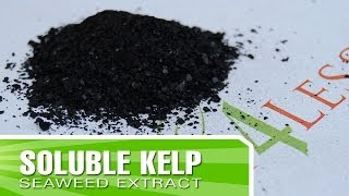 How to Make Kelp Fertilizer with Kelp4less.com