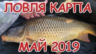 ЛОВЛЯ КАРПА В МАЕ 2019