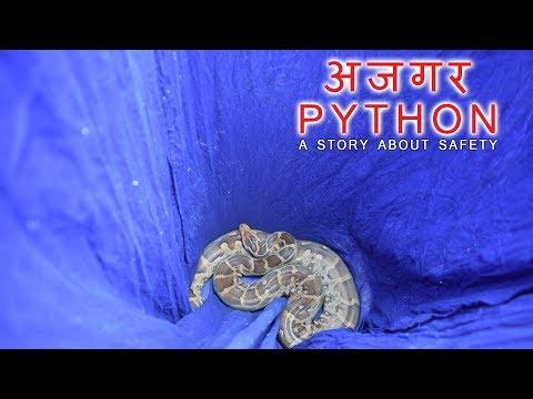 अजगर ll Python at Bandhbahal