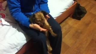 Angry dog - Злая собака (Прикол,смотреть всем)