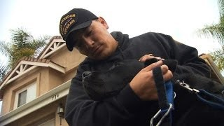 Program Aims To Provide Free Service Dogs To Vets