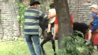 Dzień dziecka Gniezno 2011 - MOK - Konie