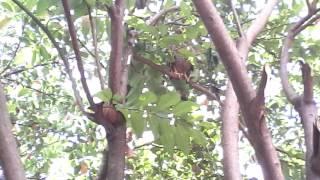 Suara burung elang saat lapar(download suara burung elang)