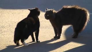 Мартовские коты деруться