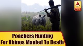 Karma? Poachers Hunting For Rhinos Mauled To Death And Eaten By Lions   ABP News
