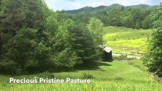 Wallin Farm For Sale Madison County NC