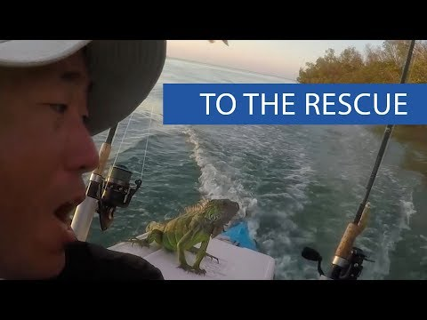 Guy Saves Iguana From Middle of Ocean